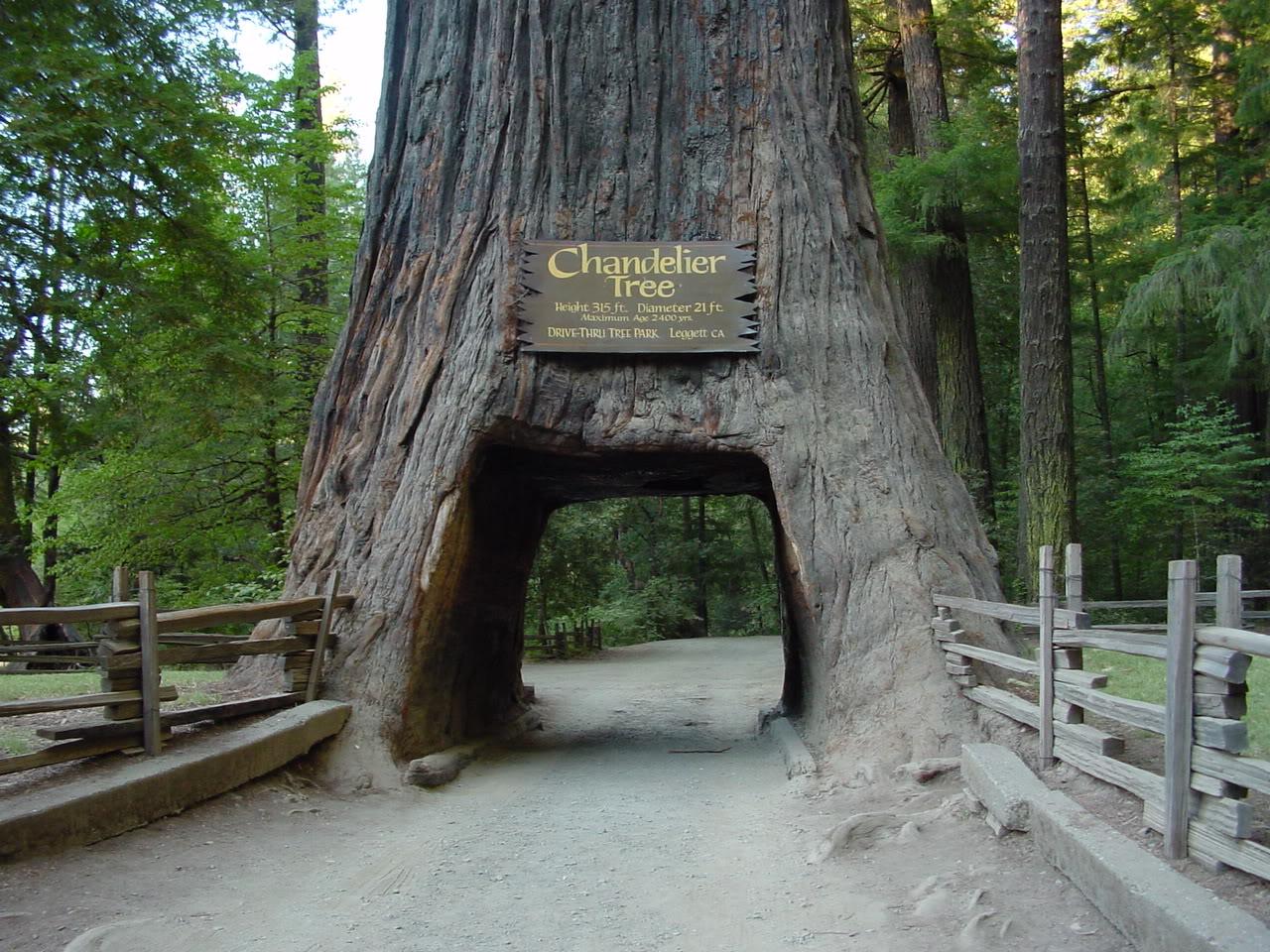 Redwood National Park Flylady Net